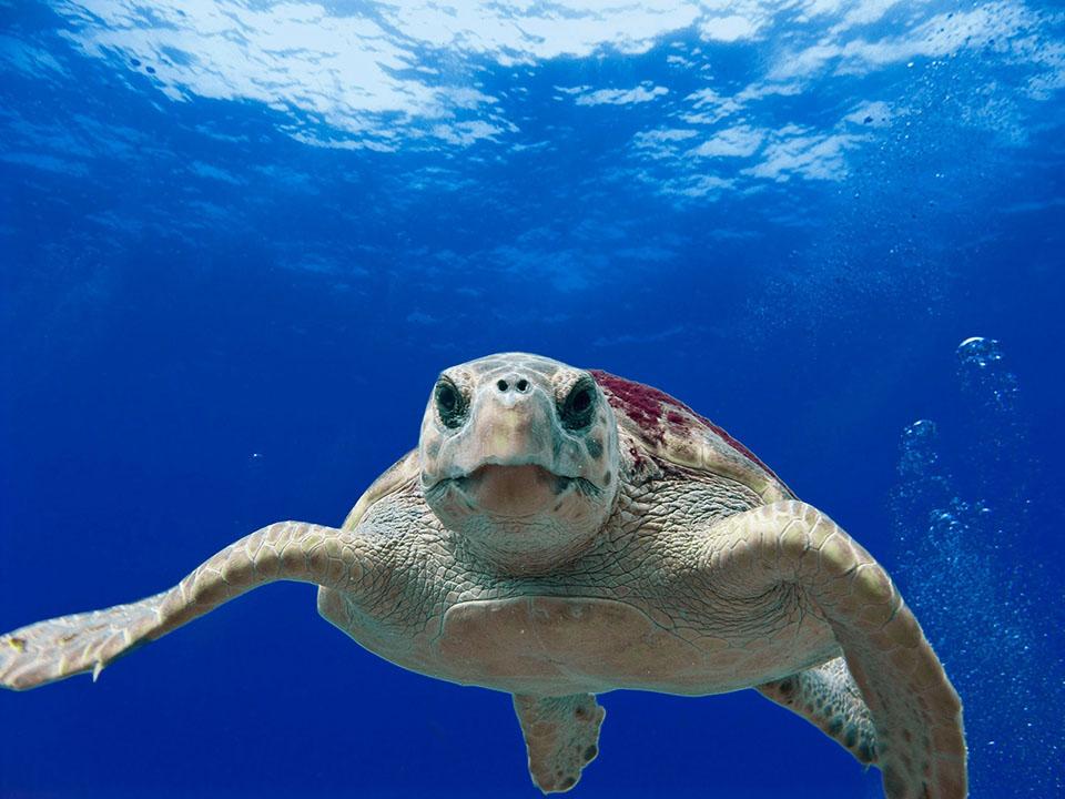 Tortuga en océano