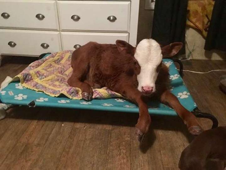 Tulip en su cama nueva