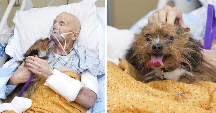 Veterano de Vietnam se despide de su perro por última vez