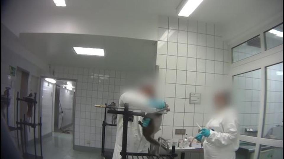 maltrato en laboratorio