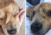 Cachorro rescatado tiene una cola saliendo de su frente