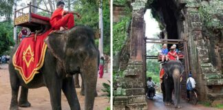Camboya prohibirá los paseos en elefante en los templos de Angkor