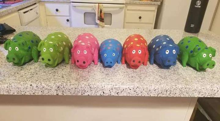 Cerdos de juguete sin cola