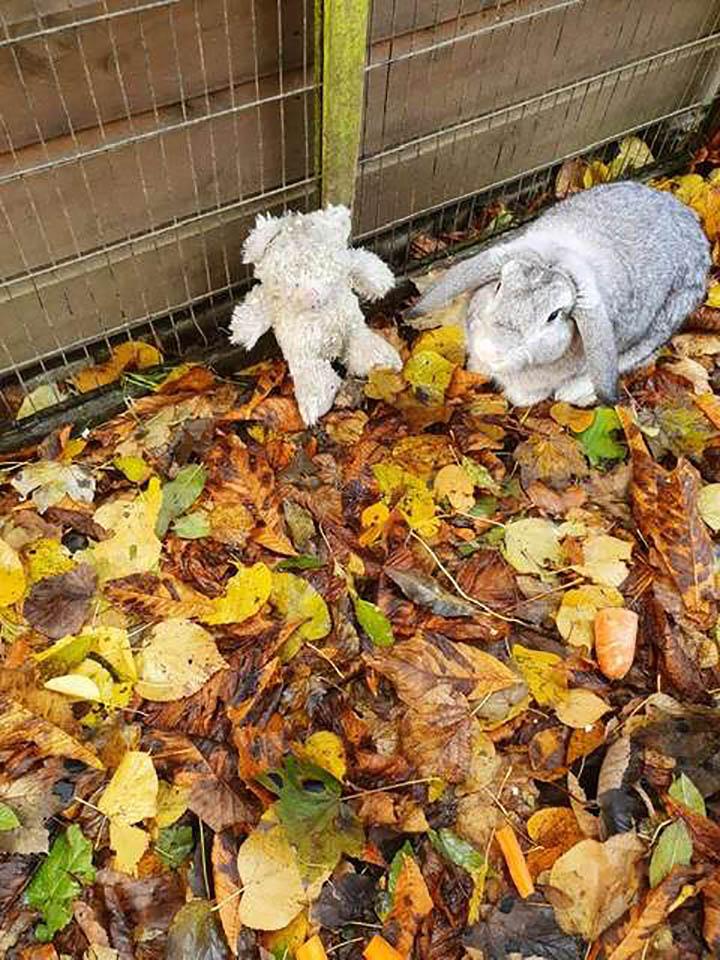 Conejo abandonado