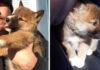 Dingo casi extinto encontrado en el patio trasero