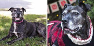 Familia adopta a perro mayor en un refugio y le brinda los mejores días