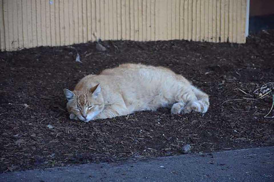 Gatito descansa