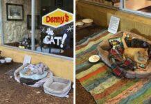 Gatito solitario se roba el corazón de las personas en un restaurante