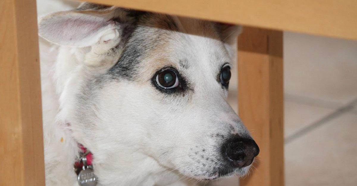 Gritarle a su perro puede provocar trauma a largo plazo y estrés