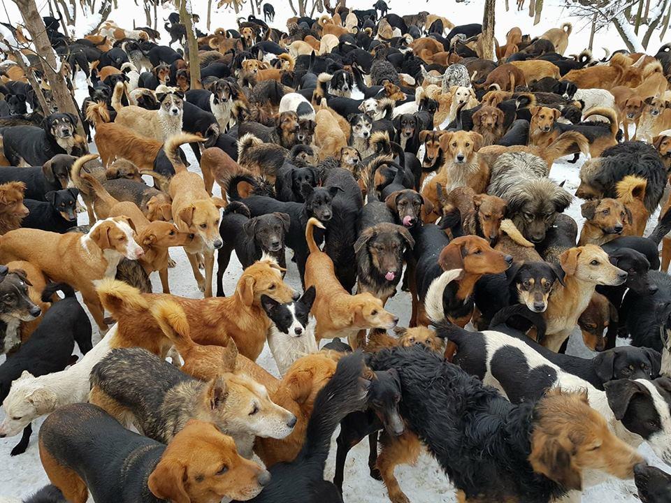 Grupo de muchos perros en el refugio
