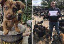 Hombre acepta cachorros que nadie quiere y cuenta con un refugio