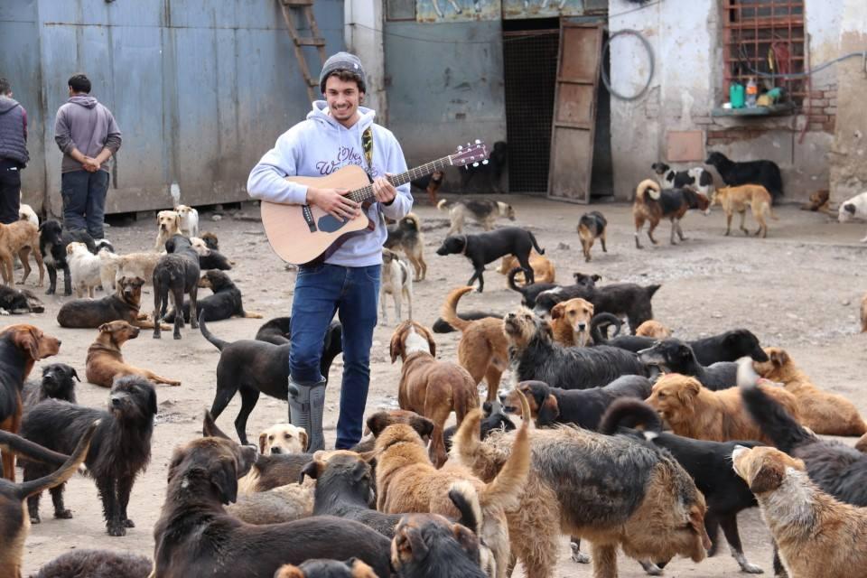 Hombre con guitarra y perros