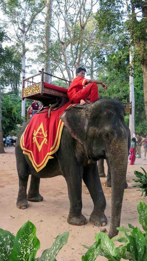 Hombre sobre elefante