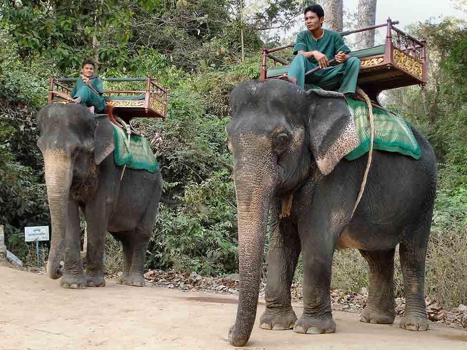 Hombres con atuendo azul se trasportan sobre elefantes