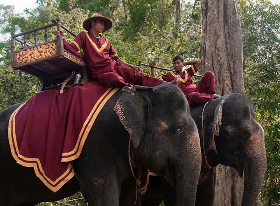 Hombres con atuendo violeta se trasportan sobre elefantes