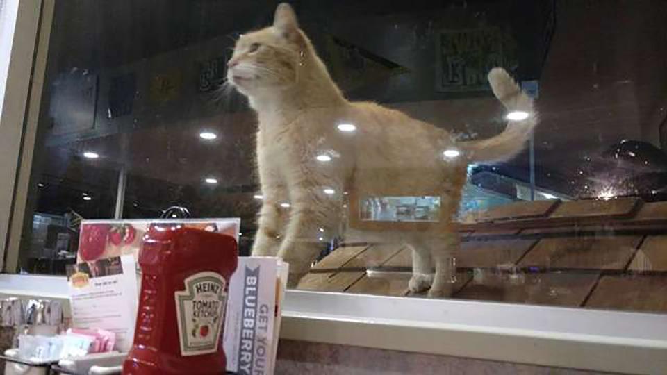 Lindo gatito cerca al restaurante