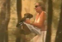 Mujer arriesga su vida para salvar a un koala