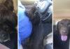 Mujer va al refugio para rescatar a un perro y sale con tres