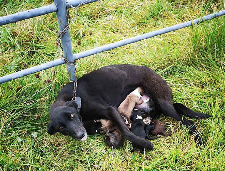 Perrita con sus cachorros fue abandonada por una persona cruel