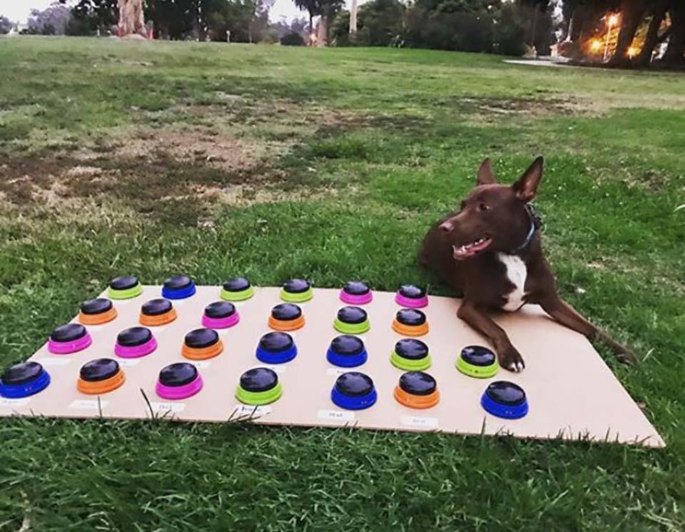 Perrito al aire libre con su tablero para formar frases