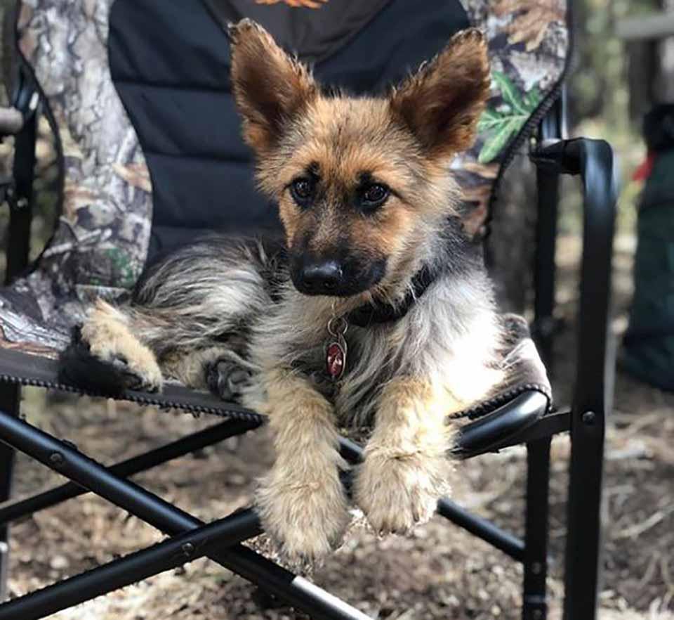 Perrito descansa en una silla
