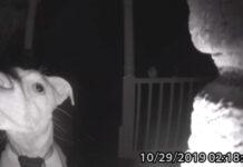 Perrito se quedó fuera de casa en horas de la madrugada y tocó el timbre