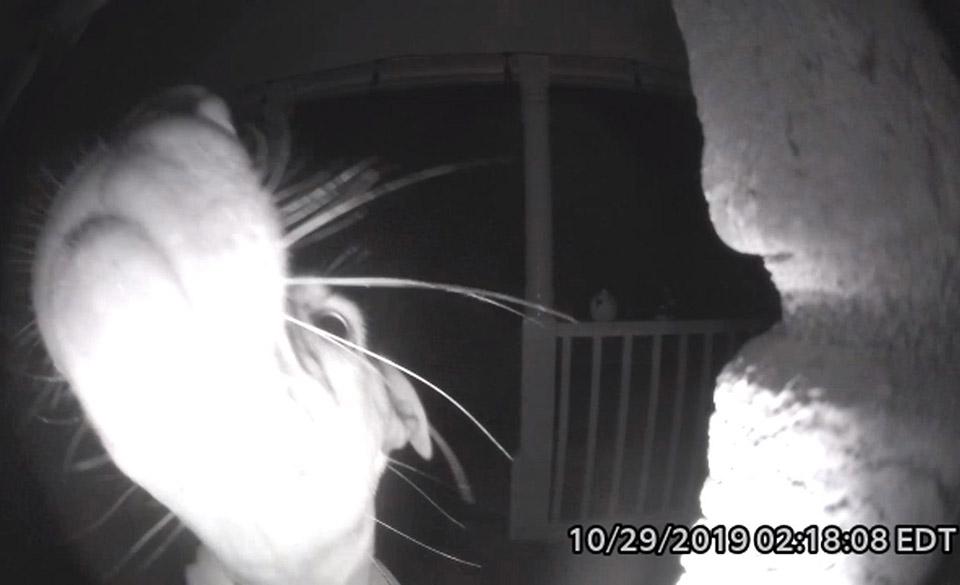 Perrito toca el timbre de la puerta