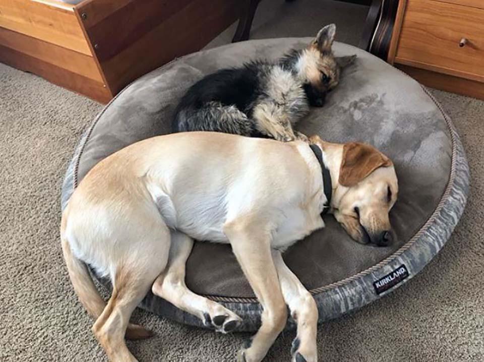 Perritos duermen