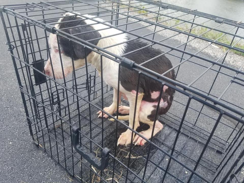 Perro enjaulado rescatado