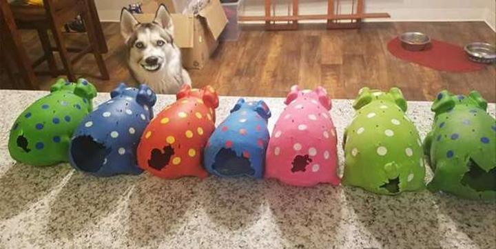 Perro le arranca la cola a todos sus cerdos de juguete
