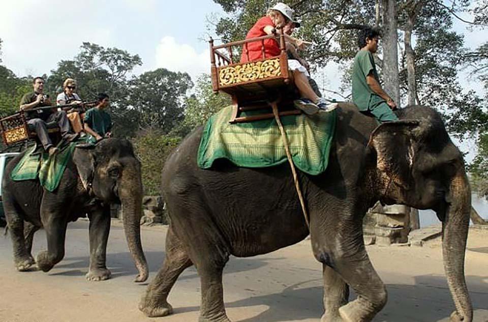 Personas pasean sobre elefantes