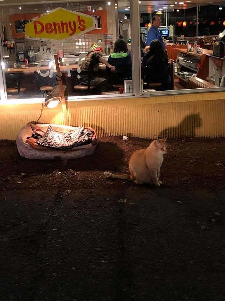 Restaurante adopta a gatito