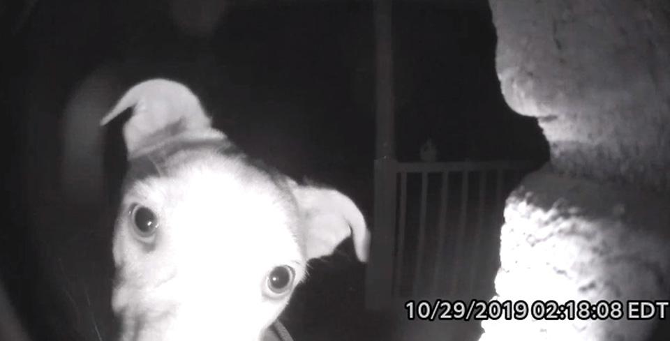 perrito observa la puerta