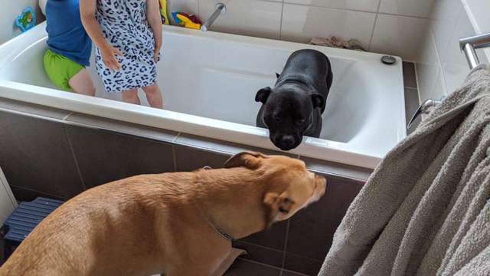 perros en el baño