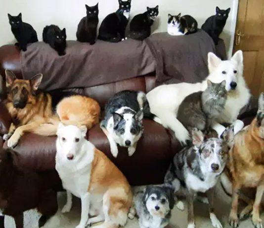 17 perros y gatos posan para el retrato familiar