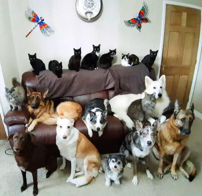 17 perros y gatos posando