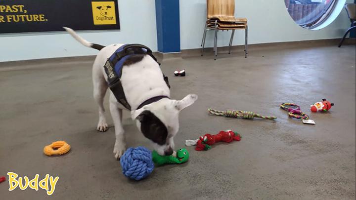 Buddy, DogsTrust