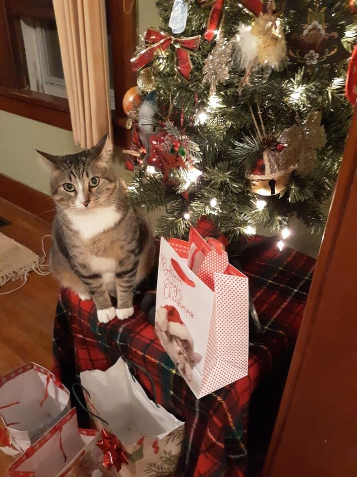 Dibs en Navidad
