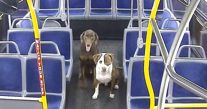 Dos perros perdidos llegan a casa a tiempo para Navidad gracias a un conductor de autobús