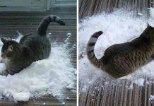 Familia trae nieve a su gato para que juegue en ella