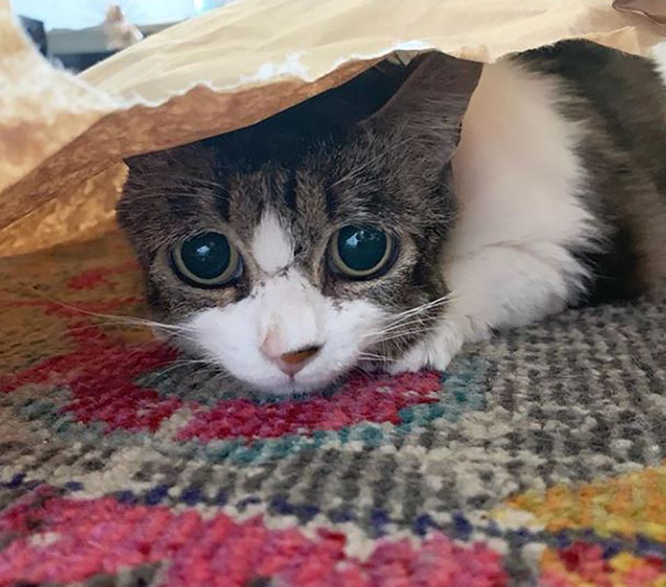 Gatita con ojos tristes