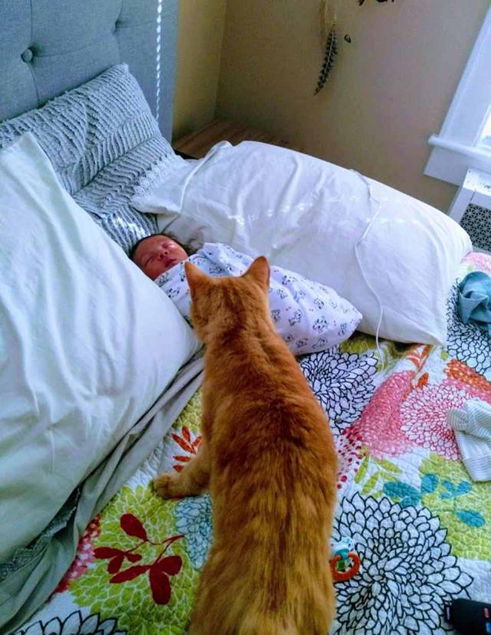 Gatito amoroso