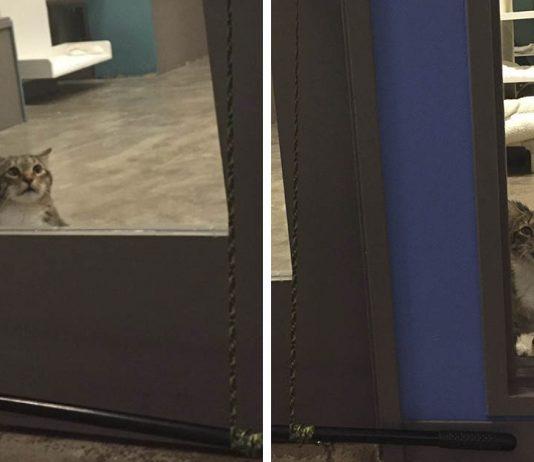 Gatito insiste en abrir la puerta y dejar escapar a otros gatos en un refugio