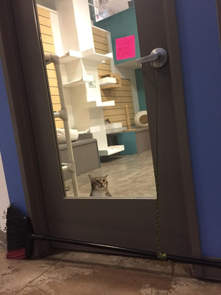Gatito mira la puerta