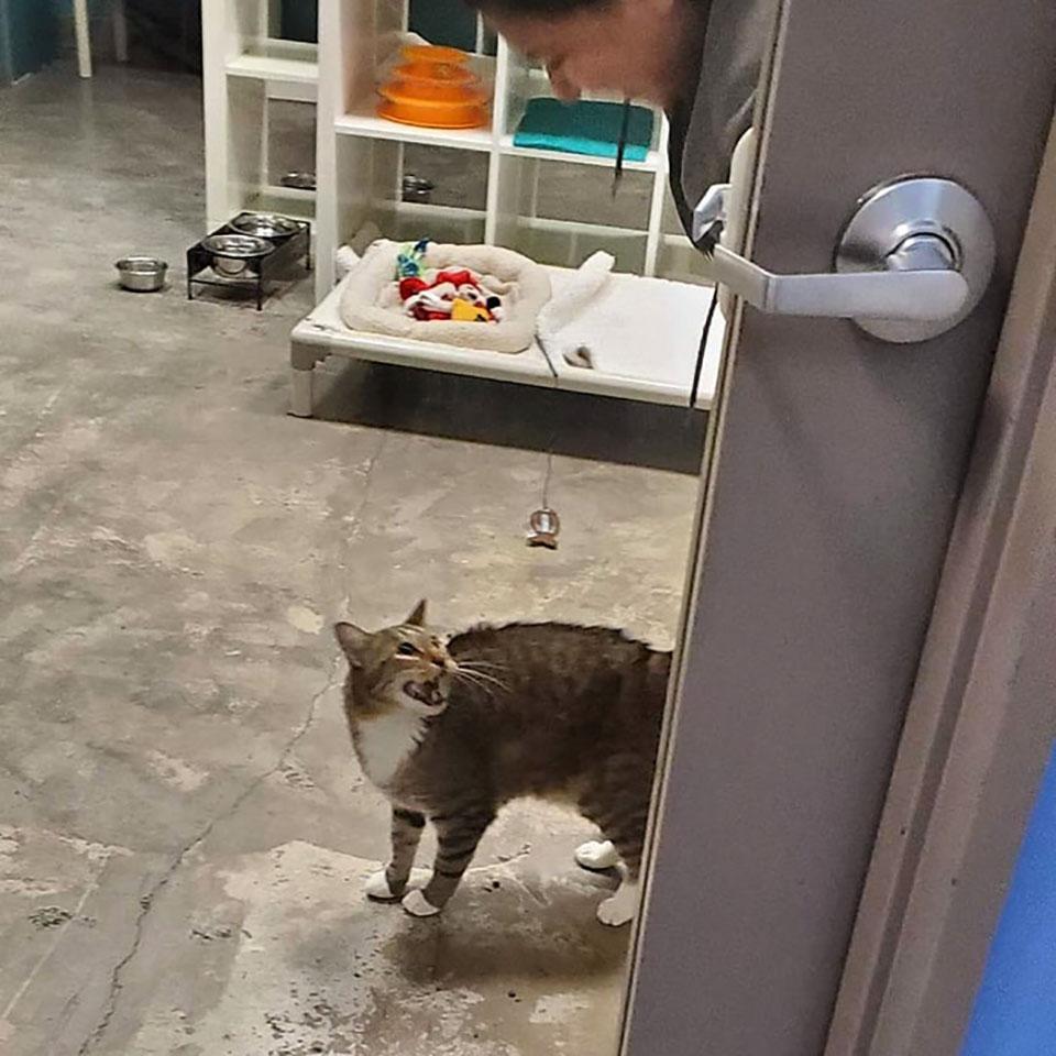 Gatito se sorprende al ver a humana