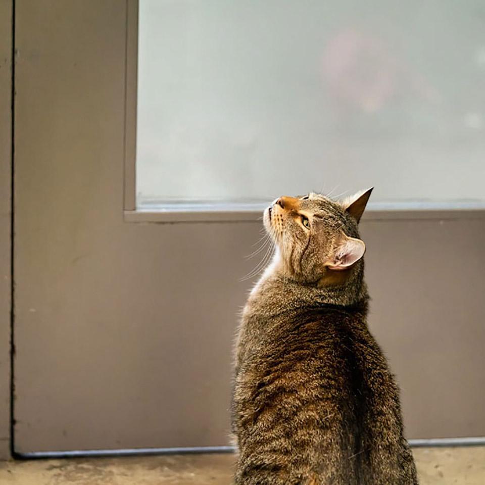 Gato cerca de la puerta