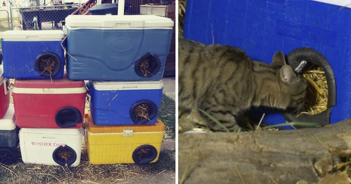 Hombre crea refugio para gatos sin hogar con refrigeradores