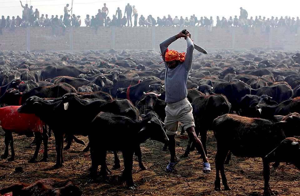 Hombre preparado para sacrificar animales