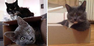 Los gatos aman las cajas porque reducen el estrés