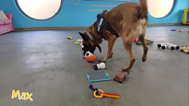 Max, DogsTrust
